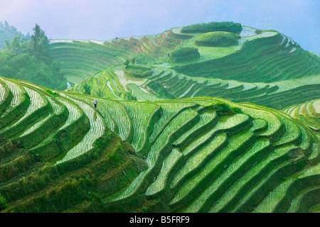 Landscape of rice terraces Longsheng Guangxi China - Stock Image