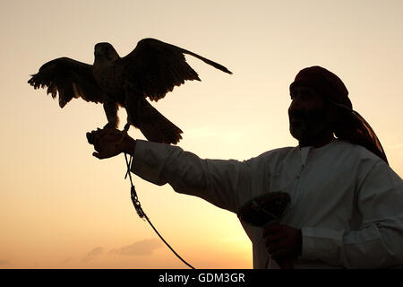 falconnery in Dubai, Dubai, UAE. - Stock Image