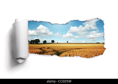 Torn paper over a summer wheat field landscape - Stock Image