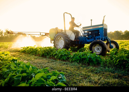 Spraying kelp on organic potato crop - Certified Organic Producer - Stock Image