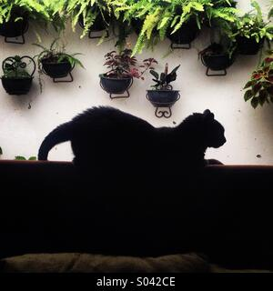 A black cat rests on top of a sofa in a house in Colonia Roma, Mexico City, Mexico - Stock Image