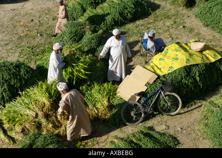 Fodder for sale in the outdoor souk in Nizwa in the Sultanate of Oman. - Stock Image