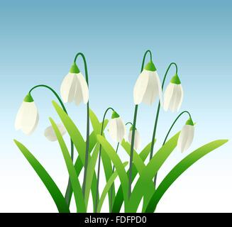 snowdrops background - Stock Image