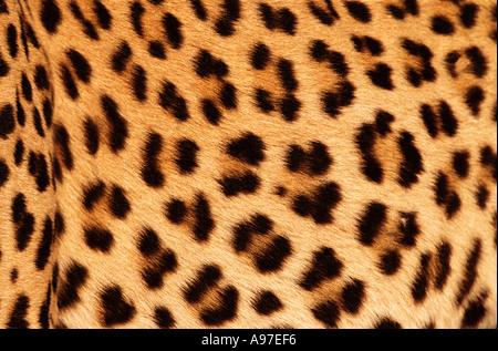 Leopard skin - Stock Image