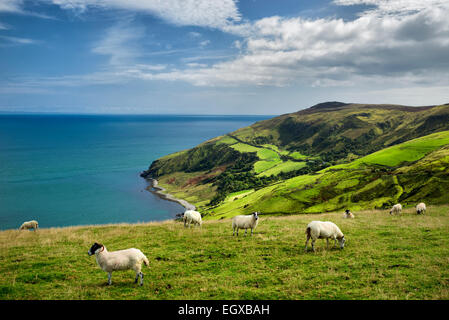 View from Torr Head with sheep grazing. Antrim Coast, Northern Ireland - Stock Image
