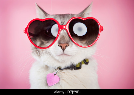 Valentine cat posing with red love sunglasses against pink  background - Stock Image