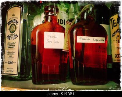 Deux bouteilles de Sloe Gin fait maison sont visibles sur l'étagère en plus d'autres bouteilles de spiritueux. - Image de l'éditeur