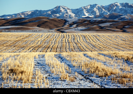 First snow on the fields and mountains - Stock Image