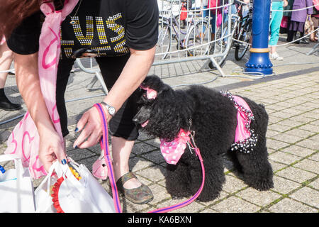 At,Elvis,Festival,Elvis Festival,Porthcawl,Bridgend,county,South,Wales,UK,U.K.,Europe, - Stock Image
