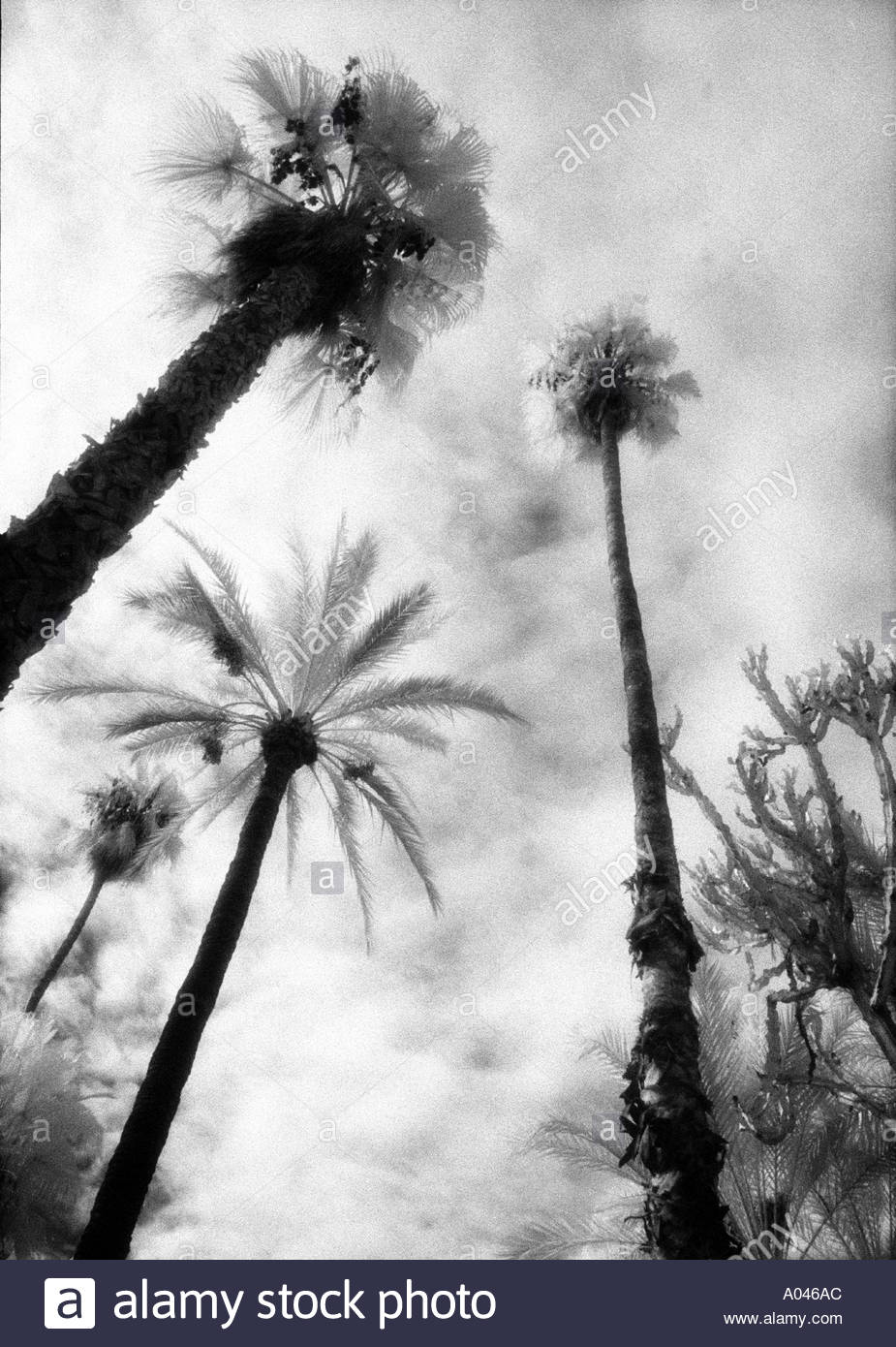 low-angle-view-of-palm-trees-in-the-palm