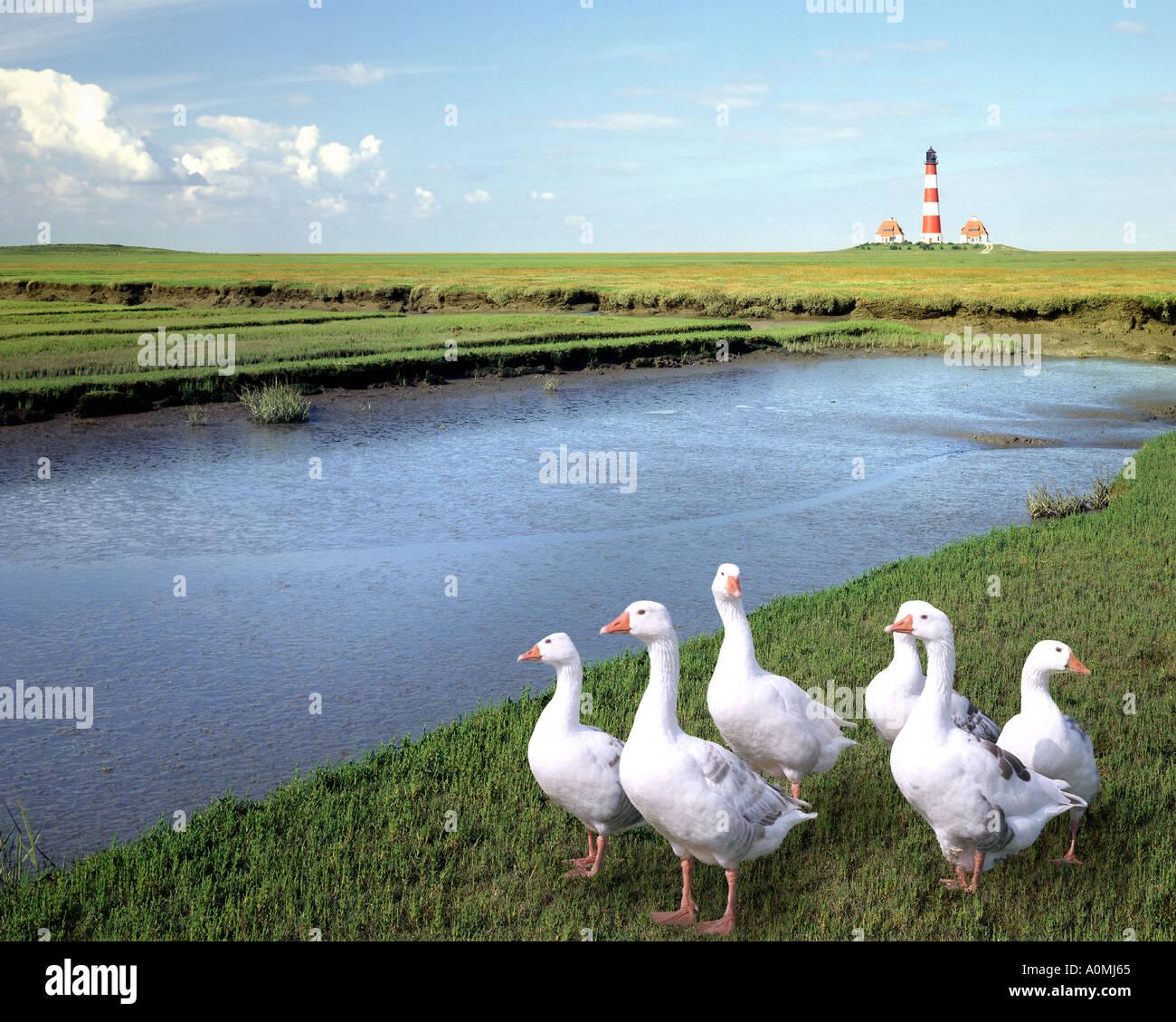DE - SCHLESWIG HOLSTEIN: Westerhever Lighthouse - Stock Image