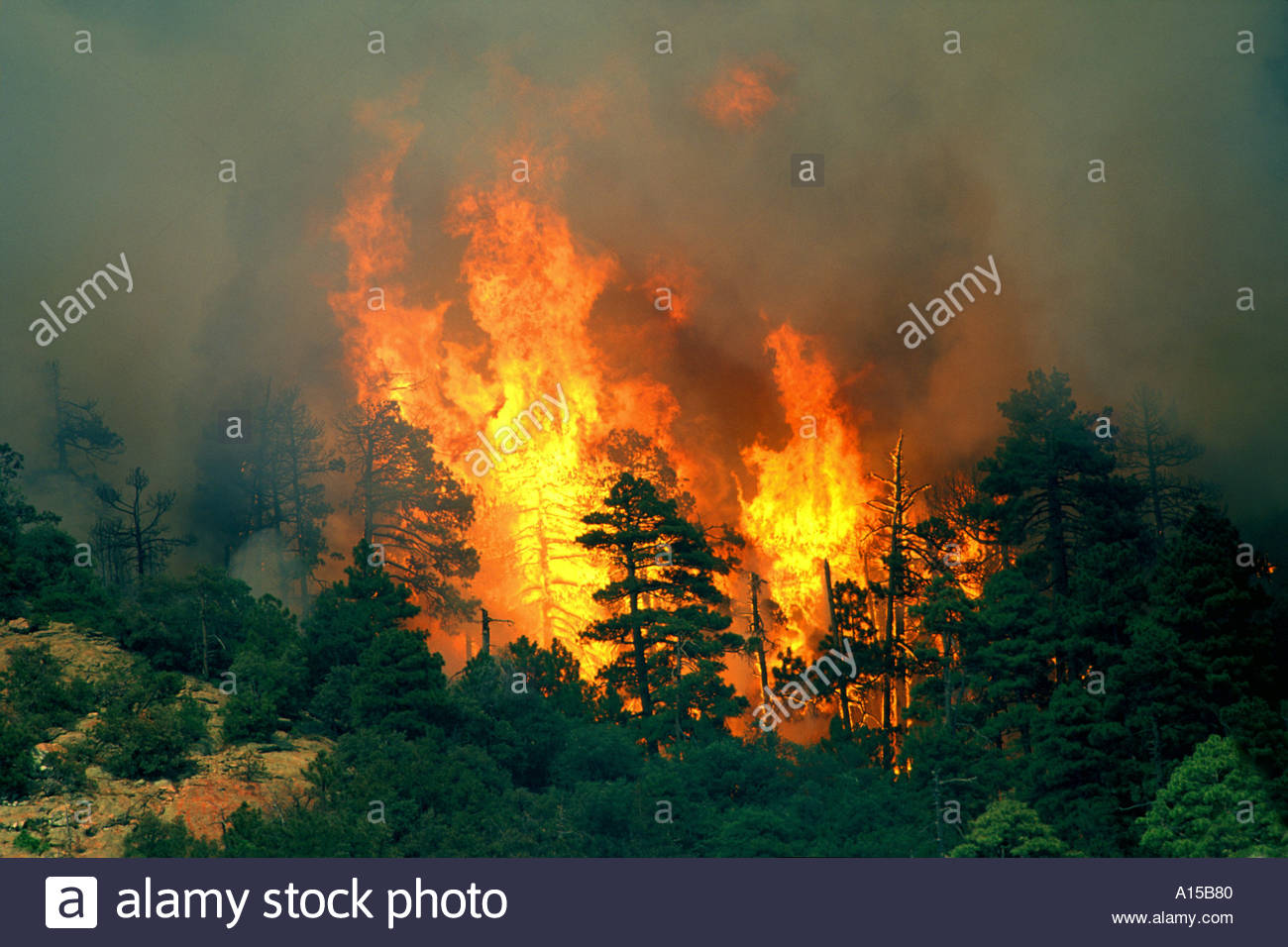 Crown fire firestorm, forest reaches flash point on Green  Mountain North of Tucson Arizona Stock Photo