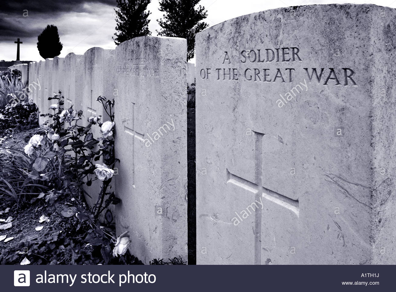 roses-growing-by-a-grave-marked-a-soldier-of-the-great-war-A1TH1J.jpg