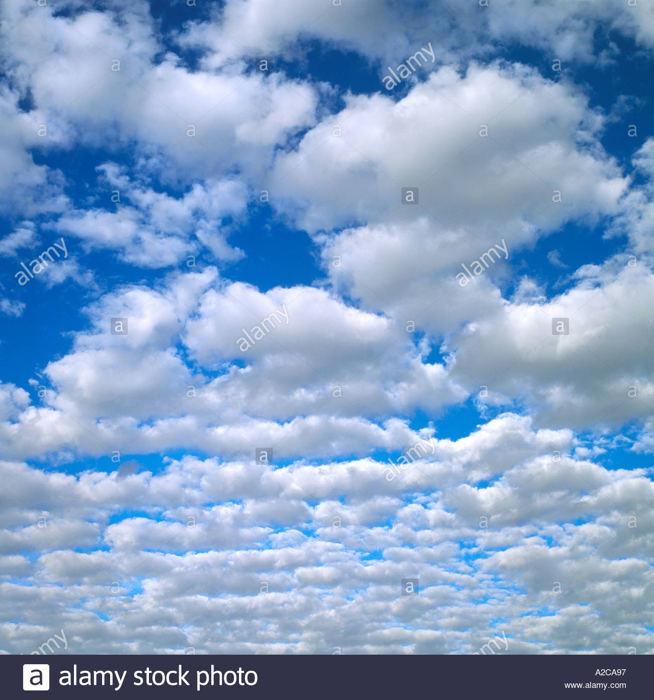 white puffy cumulus clouds on blue sky simpson clouds stock photo