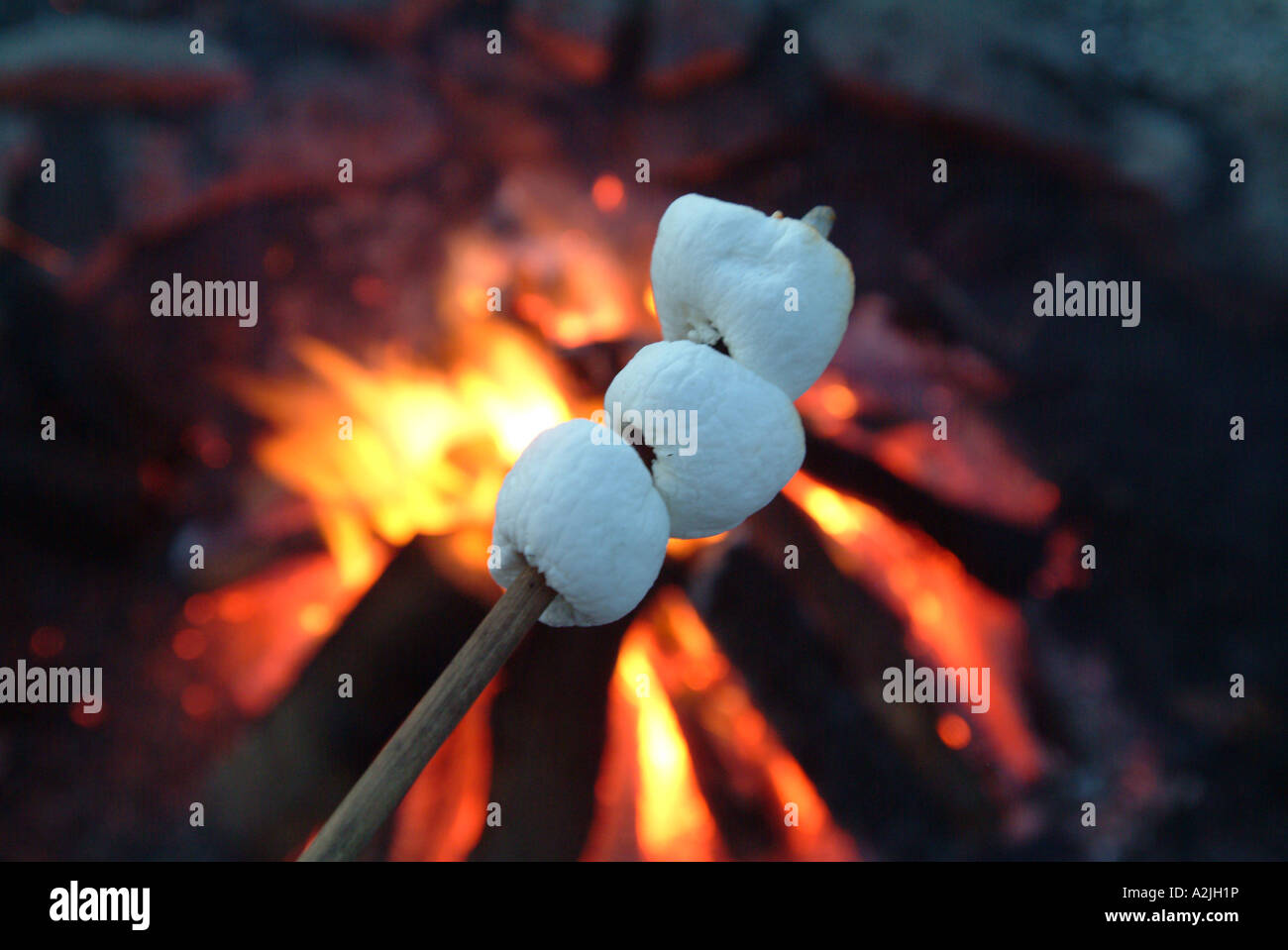roasting-marshmallows-on-an-open-fire-A2JH1P.jpg