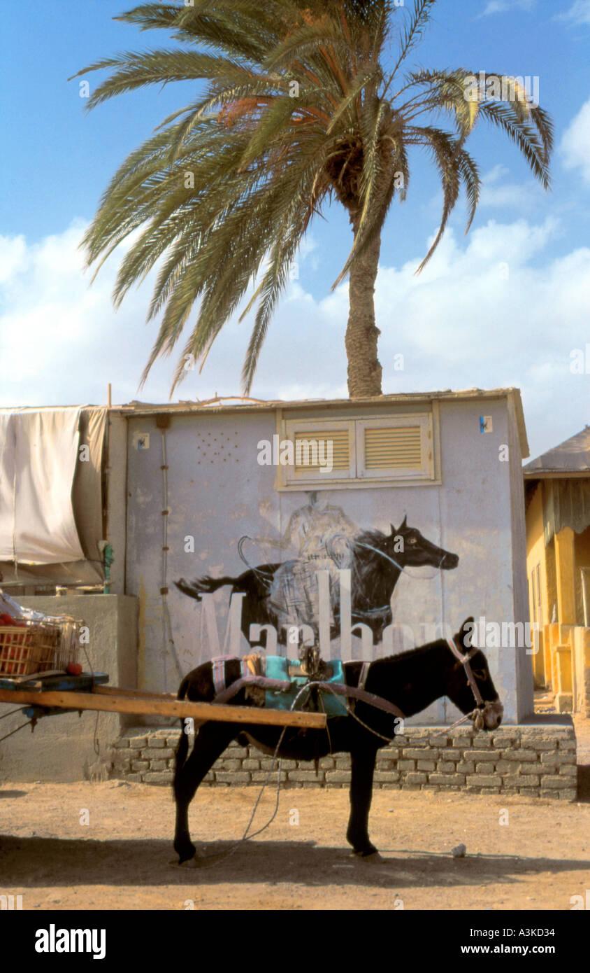 Donkey advert and Marlboro Al Quseir Egypt - Stock Image