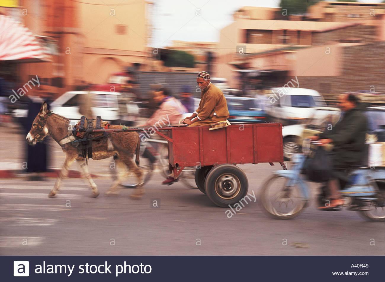 donkey-cart-in-marrakech-A40R49.jpg