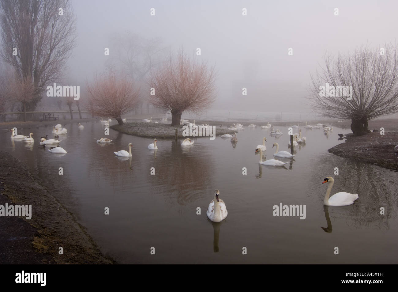 wildfowl-wetlands-trust-bird-reserve-slimbridge-gloucestershire-uk-A45X1H.jpg