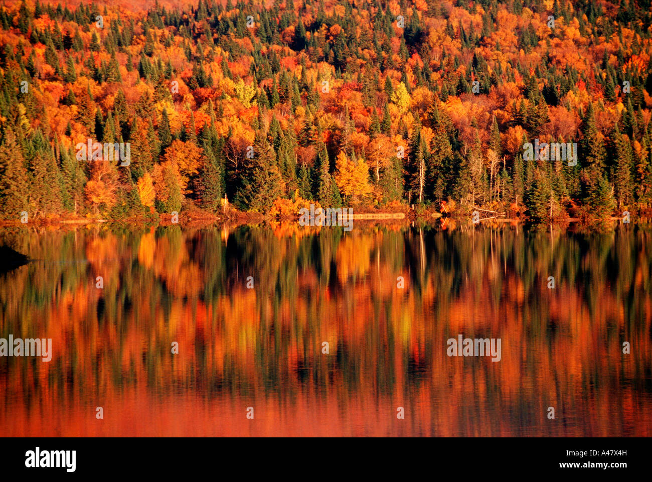 Autumn trees reflected in a lake in Quebec Stock Photo
