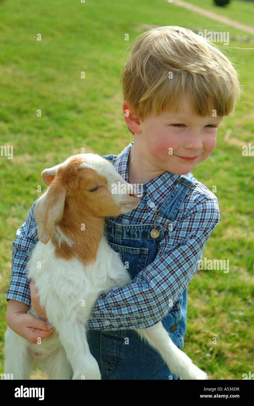 a-boy-and-a-baby-goat-on-a-farm-in-virginia-A536DR.jpg
