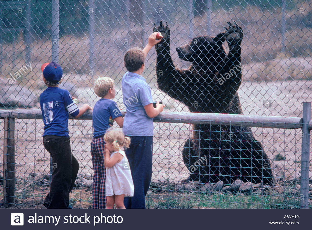 grizzly-bear-and-child-with-apple-at-a-g