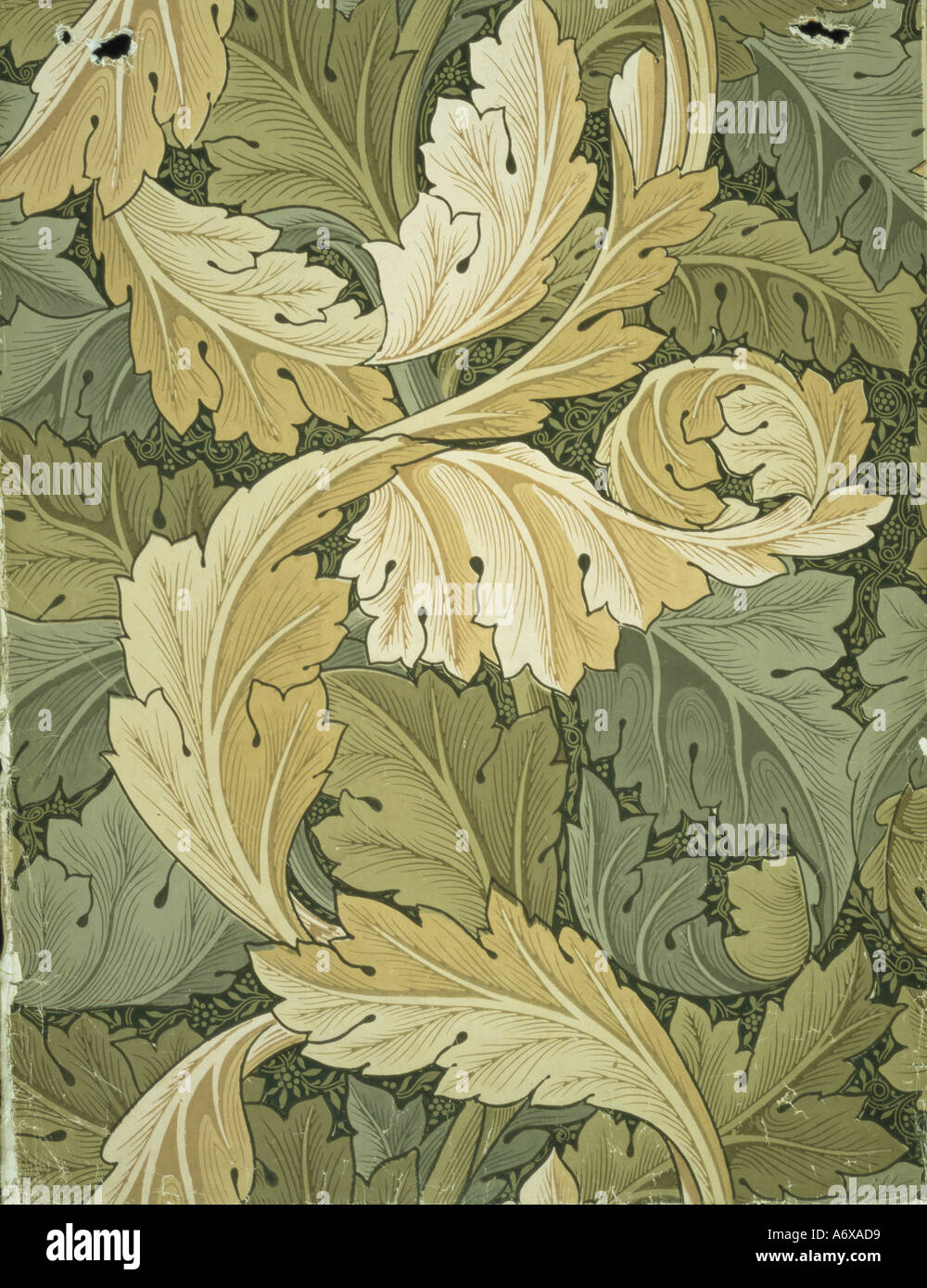 Acanthus wallpaper by William Morris. England, 19th century. - Stock Image