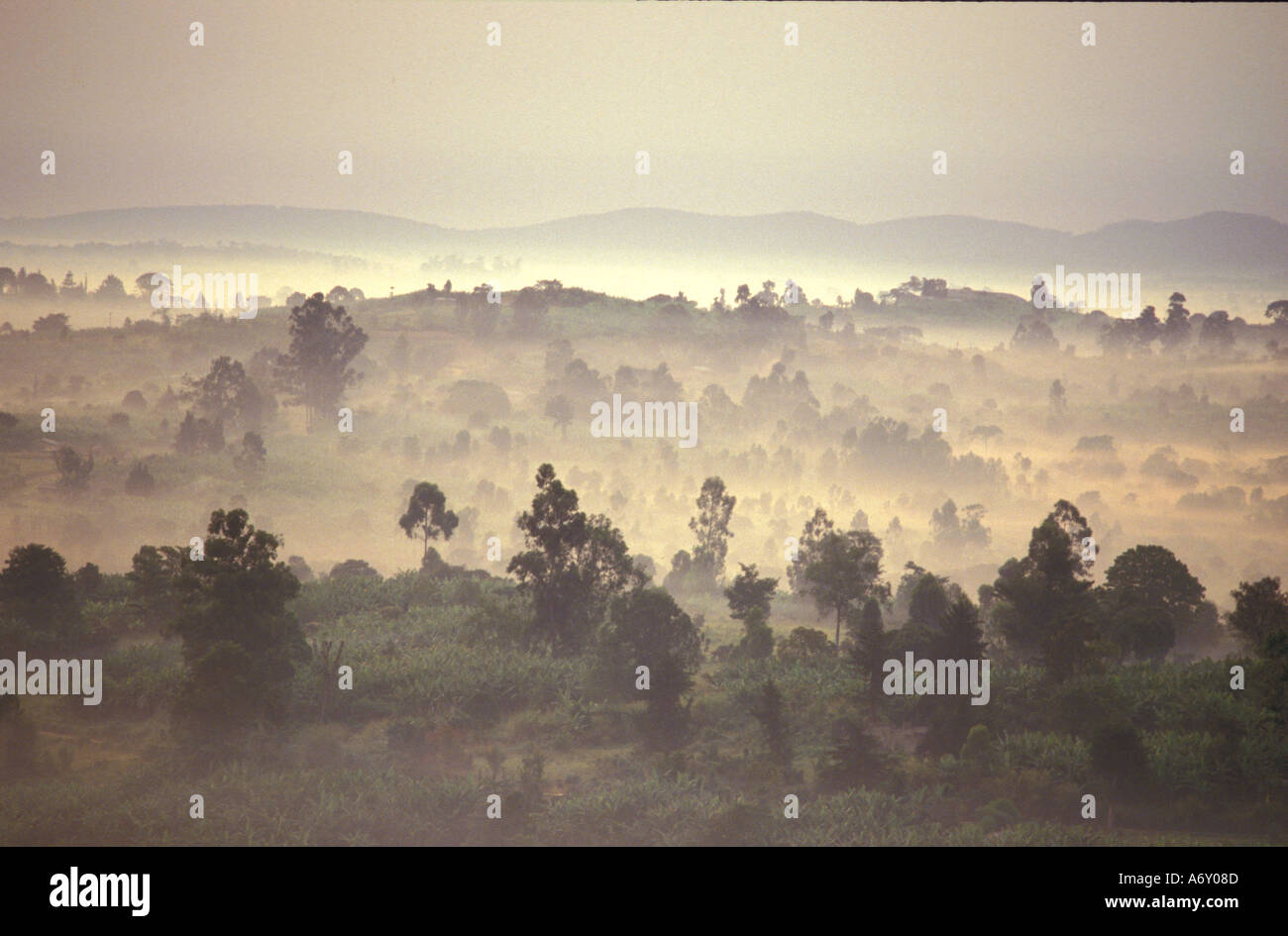 Spectacular scenic vista to distant mountains of golden eerie mist rising over Toro game park at dawn in Uganda - Stock Image