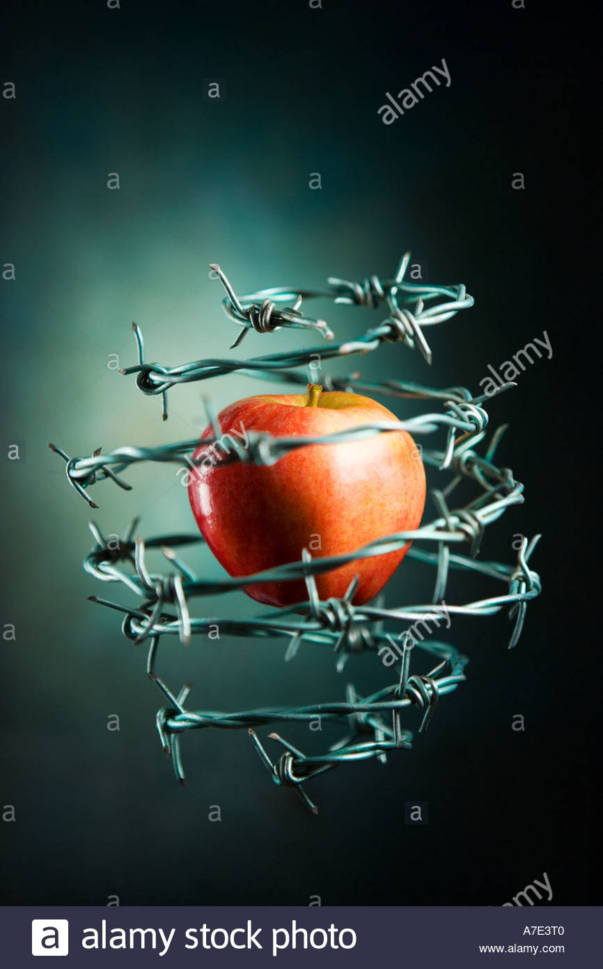 forbidden-fruit-an-apple-surrounded-by-barbed-wire-A7E3T0.jpg