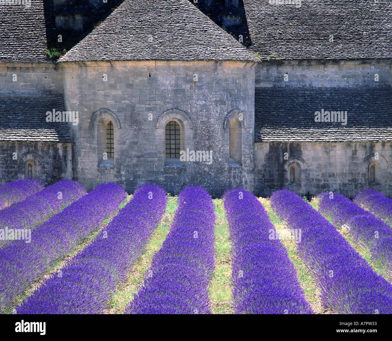 FR - PROVENCE: Abbaye de Senanque near Gordes - Stock Image