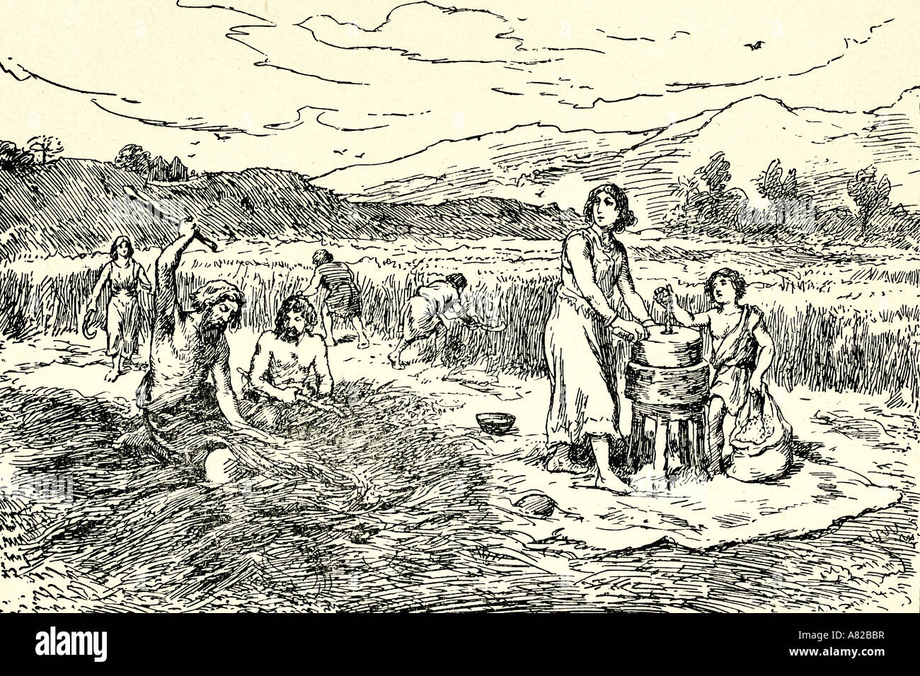Agriculture in Iron Age. Harvesting wheat. Antique illustration ...