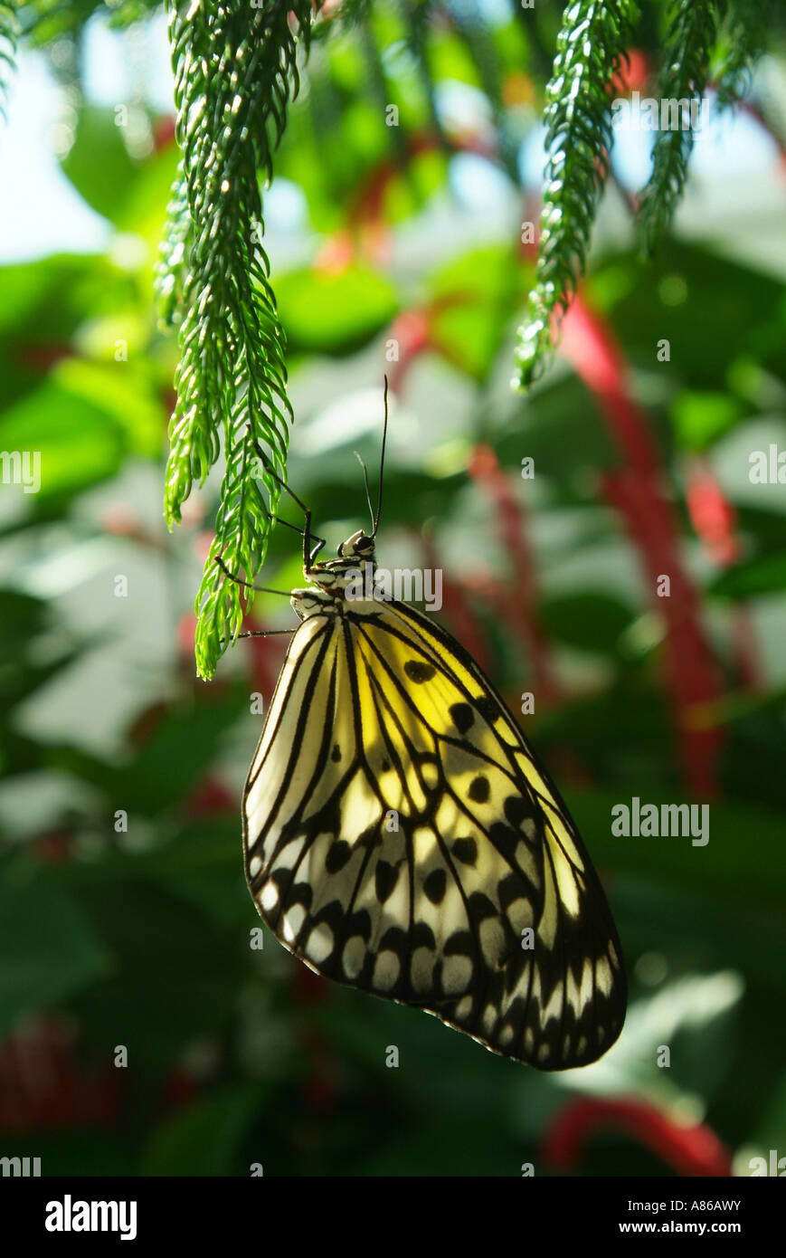 usa-florida-key-west-butterfly-nature-conservatory-A86AWY.jpg
