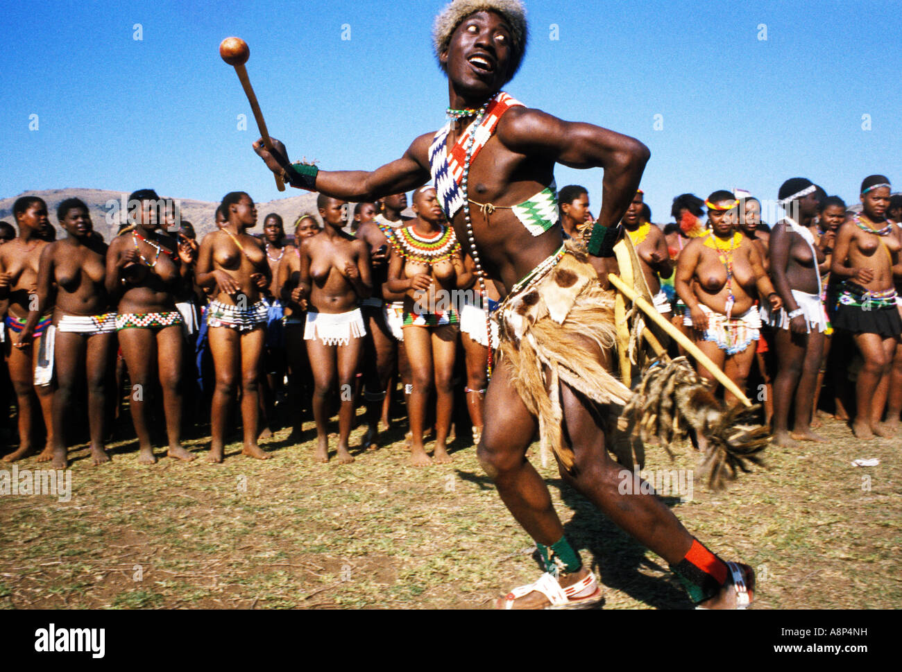 Zulu reed dance stock photos zulu reed dance stock images alamy zulu reed dance ceremonial participants natal south africa stock image stopboris Choice Image