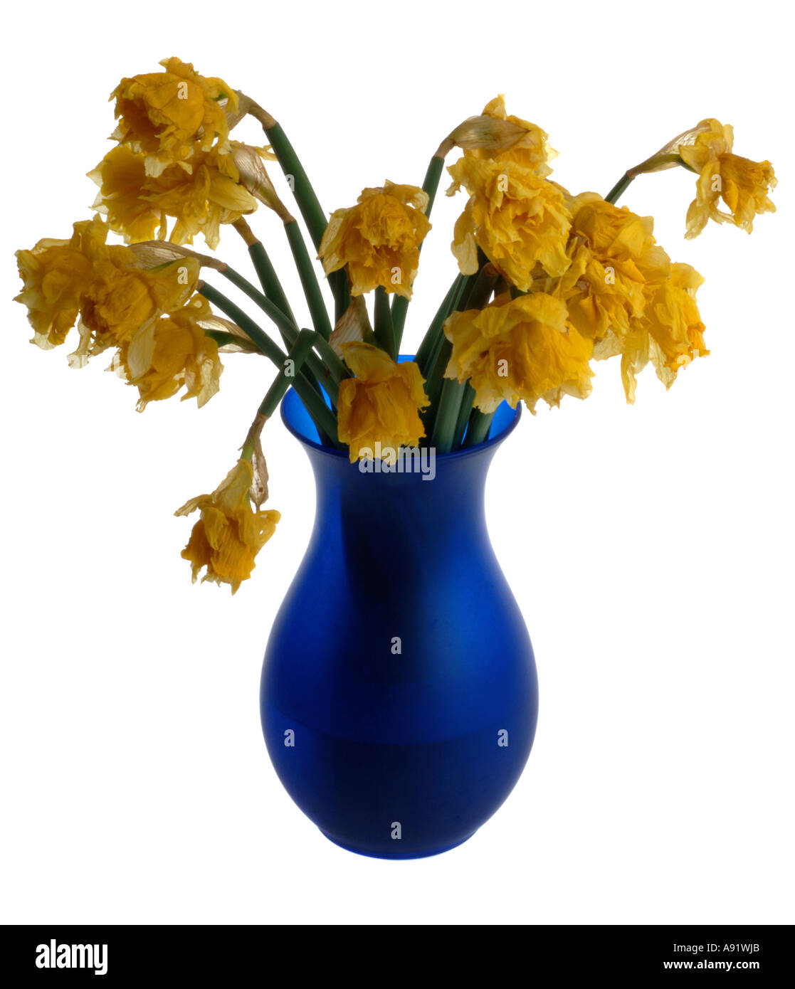 Dead flowers in a vase - Stock Image