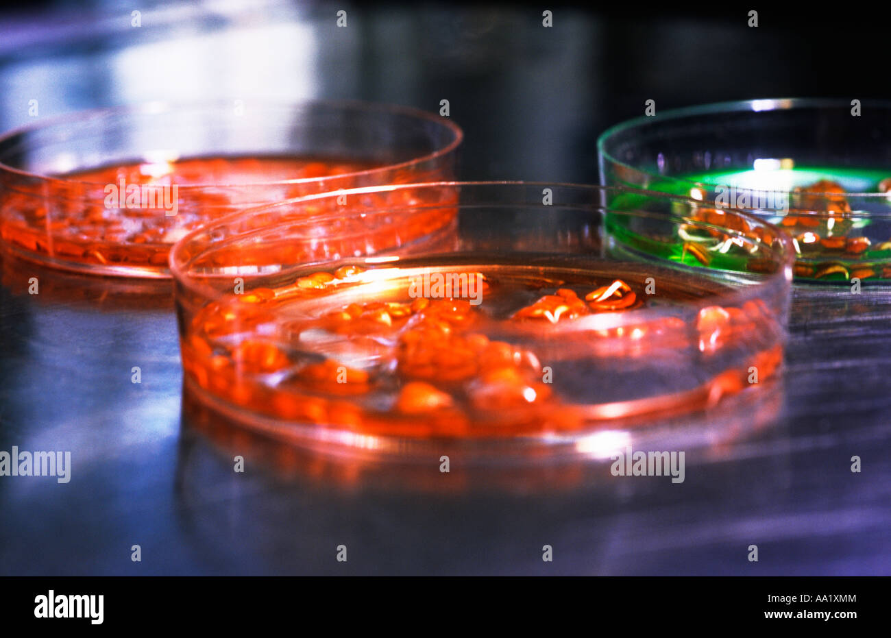 Science Lab Petri Dishes - Stock Image