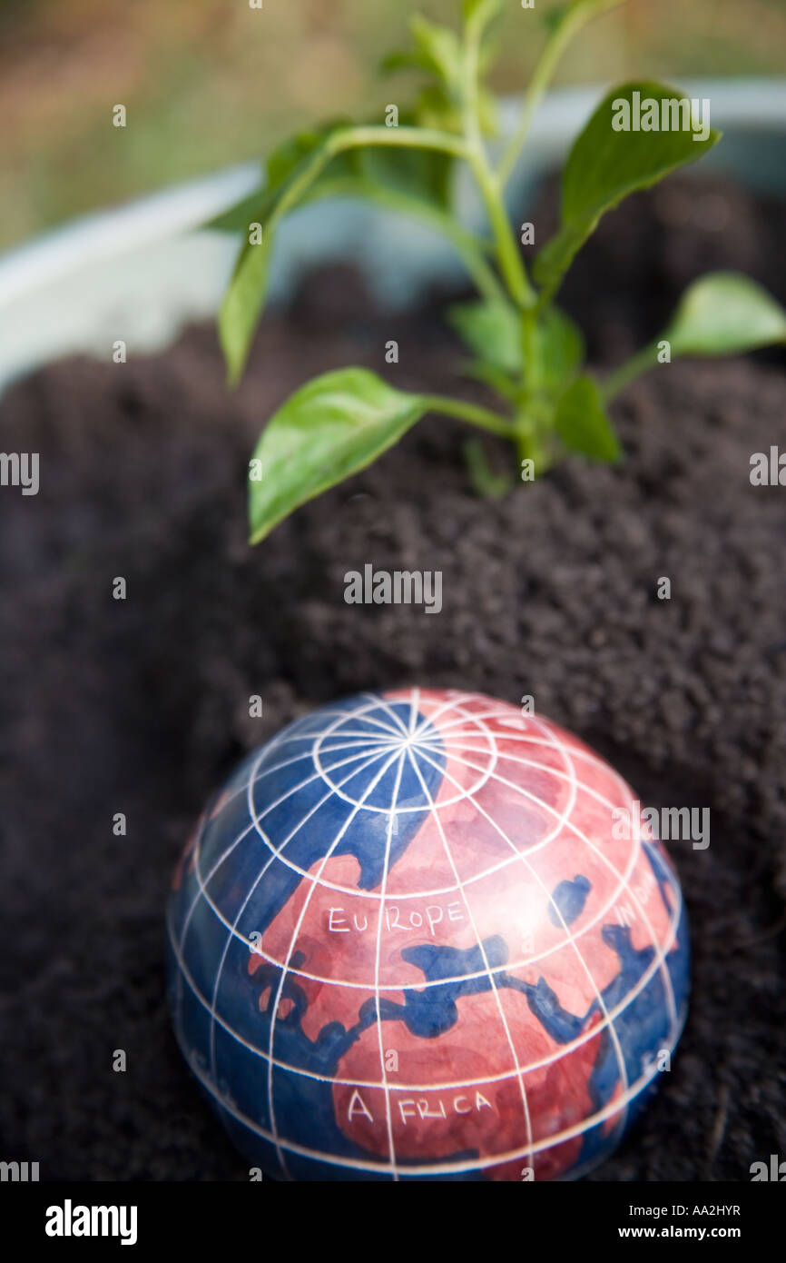 A globe of the world with  Europe and Africa showing placed in a pot of soil with a seedling in the background. - Stock Image