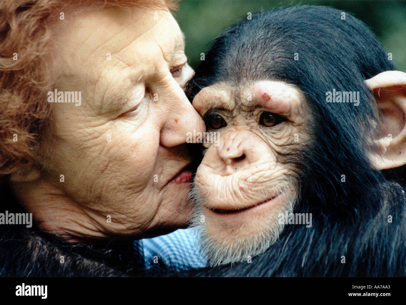 Molly Badham founder of Twycross Zoo with a young chimpanzee Stock Photo
