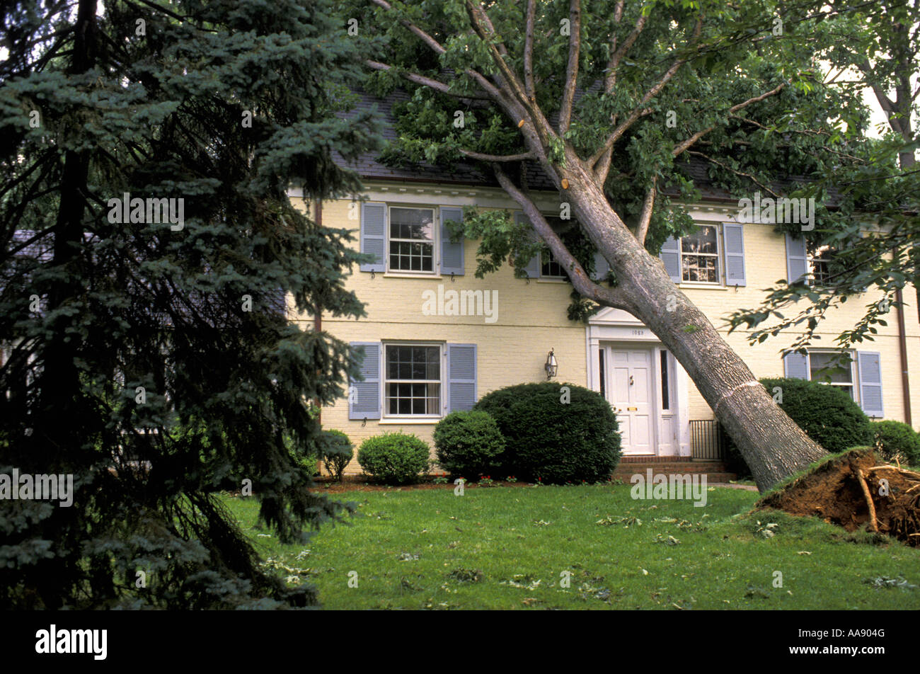 A tree falls on a home after a powerful Summer storm Maryland USA Stock Photo