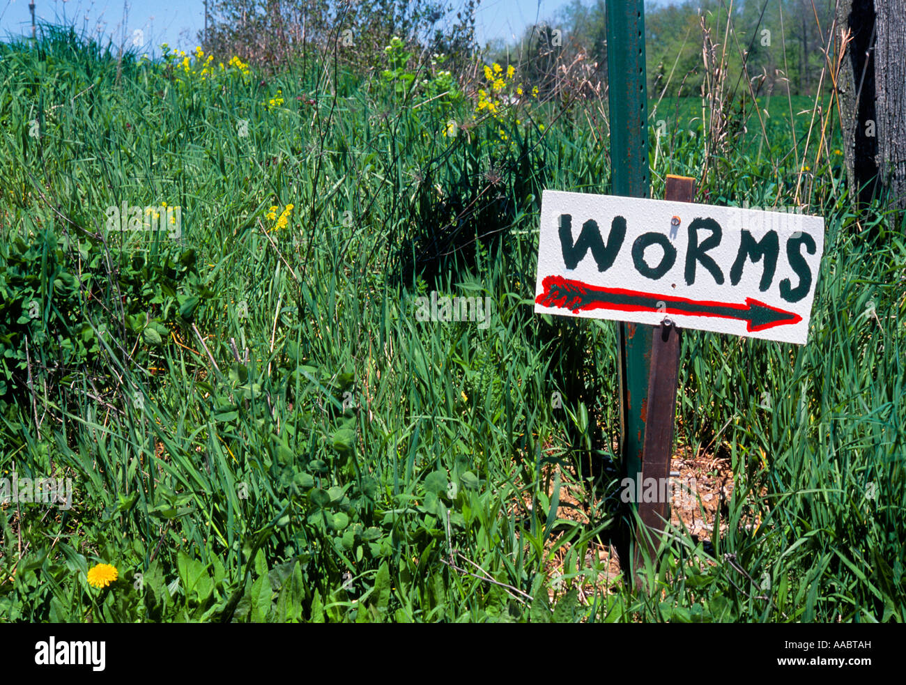 Worms For Sale Sign - Stock Image
