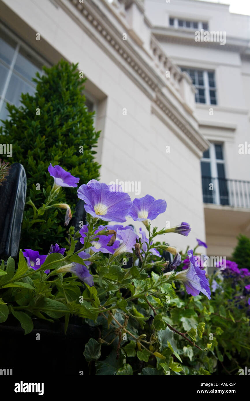 Townhouse in Wilton Crescent Belgravia exclusive area of London SW1 - Stock Image
