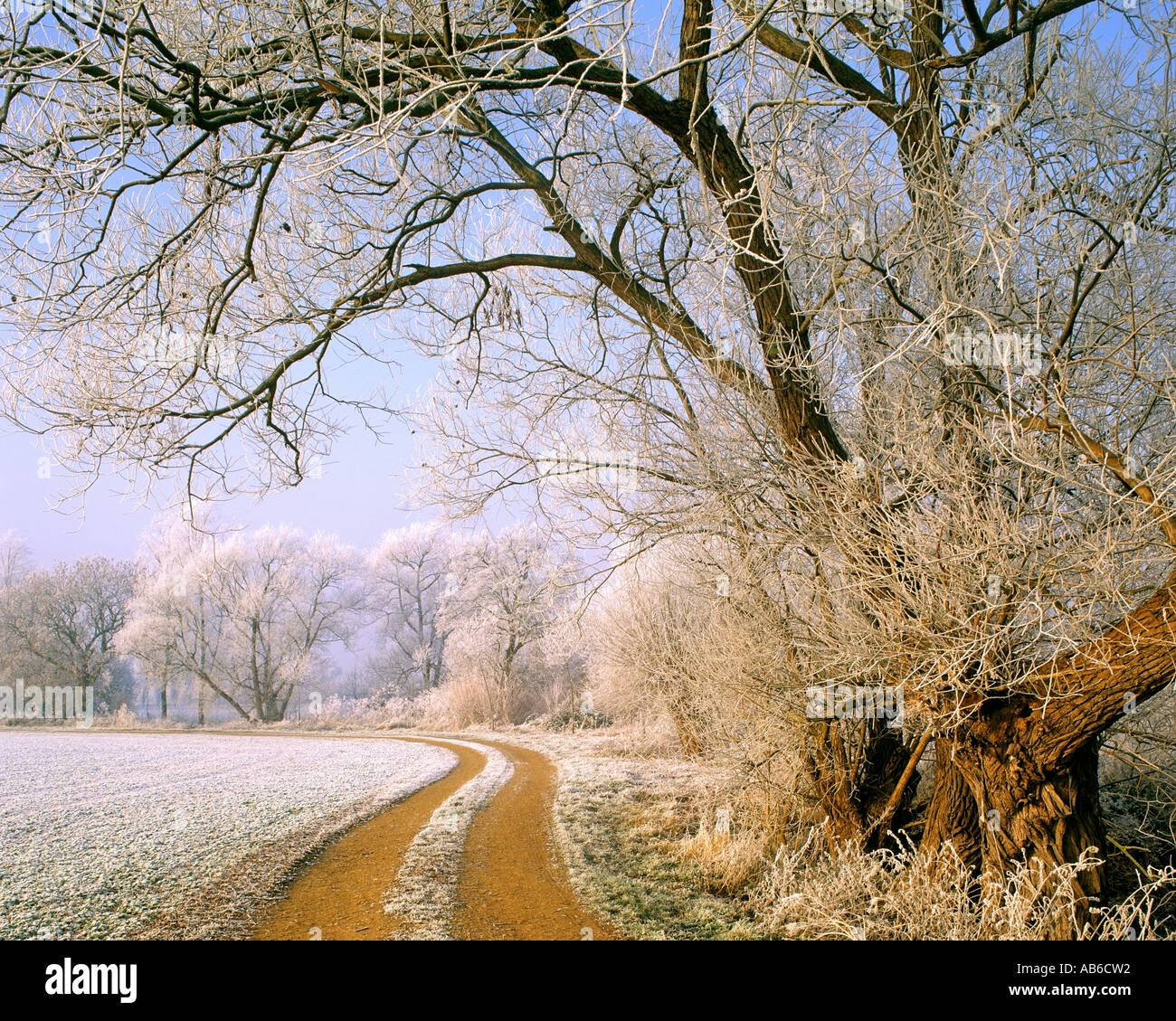 GB - GLOUCESTERSHIRE:  Winter Scene in the Cotswolds - Stock Image