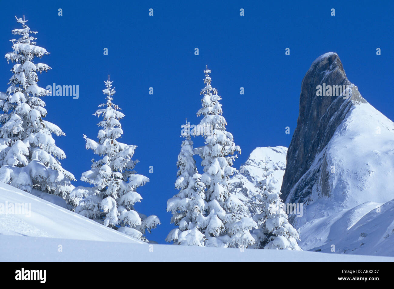 snowy landscape, snow covered spruces in the front, mountain tops in the back, France, Rhne-Alpes, National Park - Stock Image