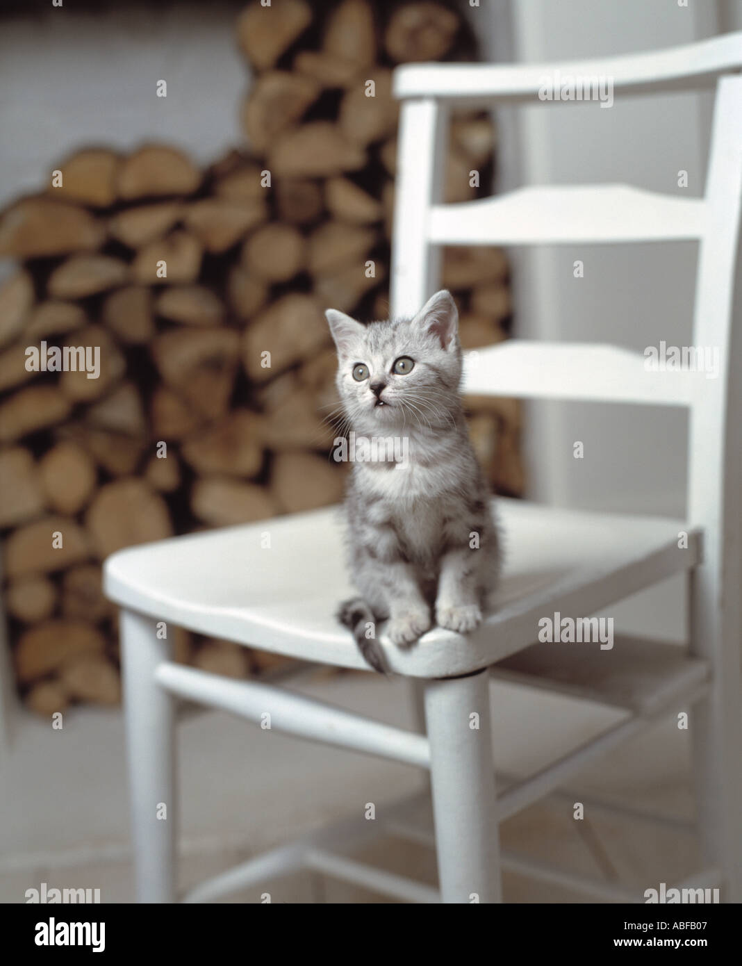 Cat on chair - Stock Image