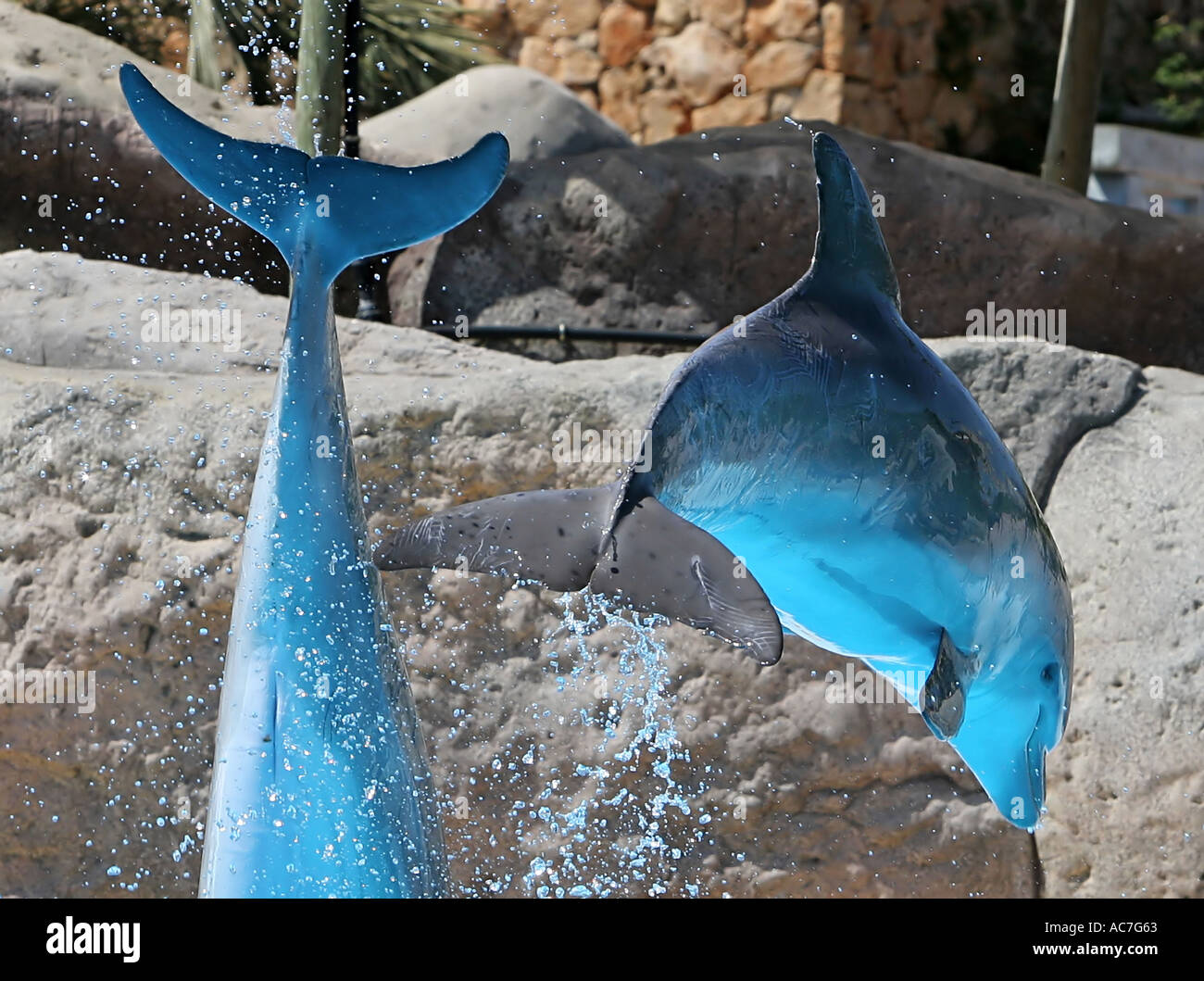 2 Dolphins leaping out of water