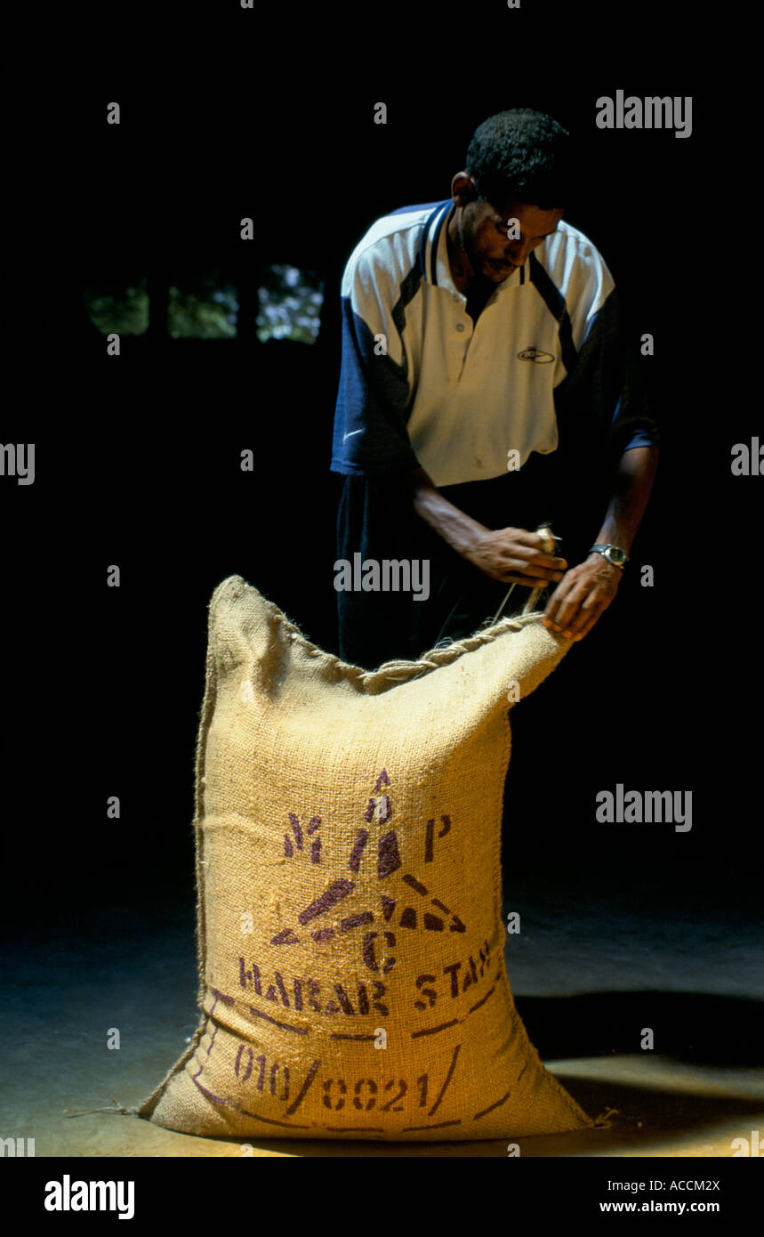 Ethiopia, a man stitching 60Kg bag Harar star green coffee beans for export. - Stock Image