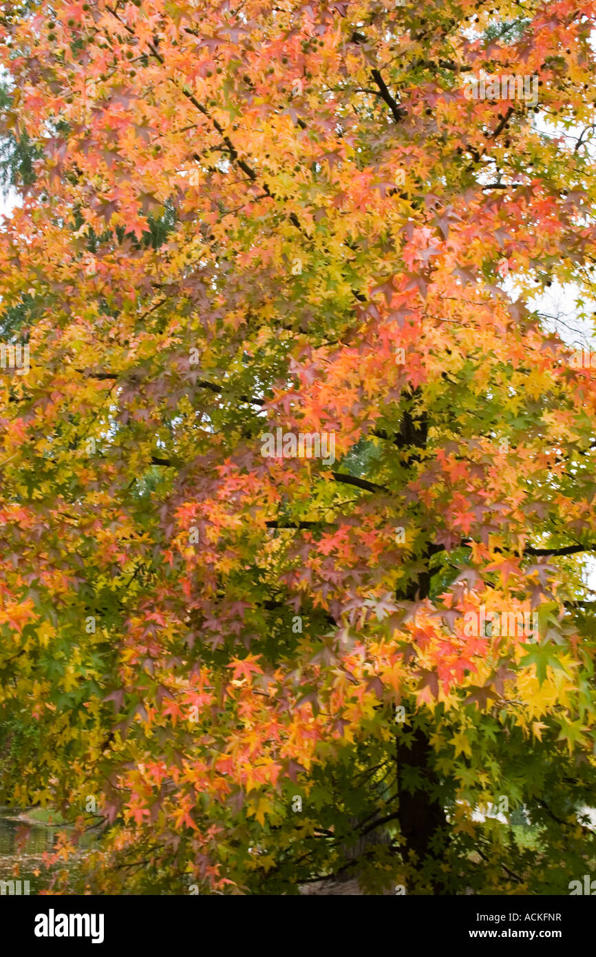 autumn tree Stock Photo