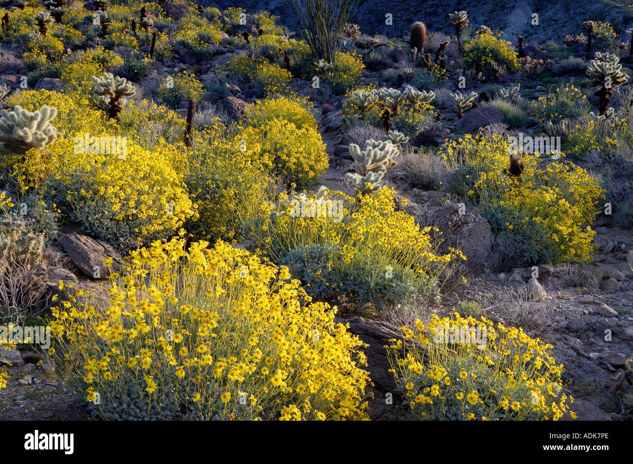 Yellow Flowers California Images Flower Decoration Ideas