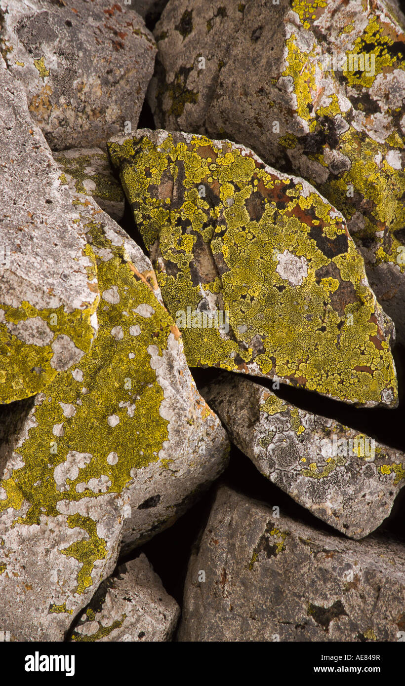 Lichen Growth Stock Photos Amp Lichen Growth Stock Images