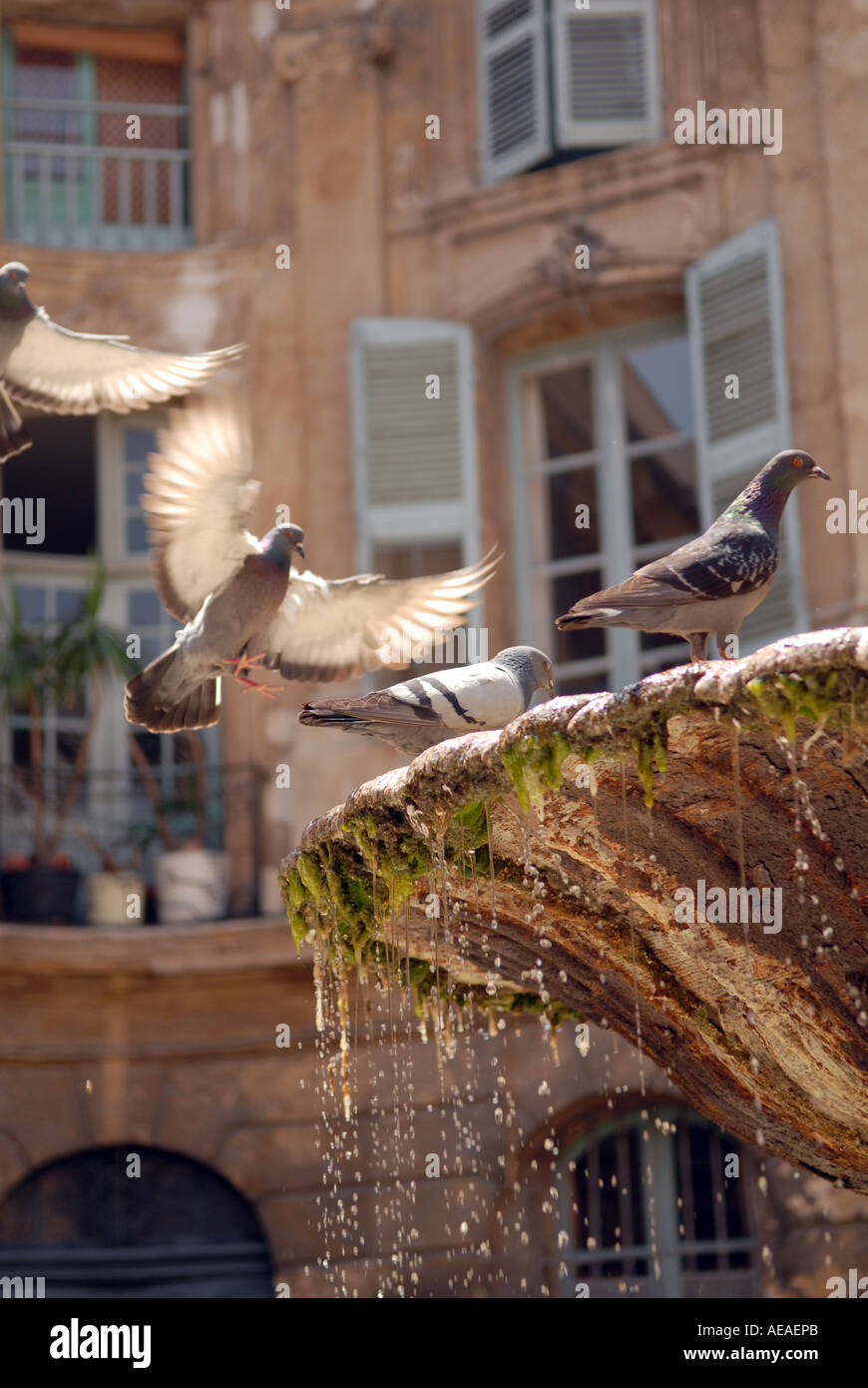 Pigeons on a fountain, Aix en Provence, France - Stock Image