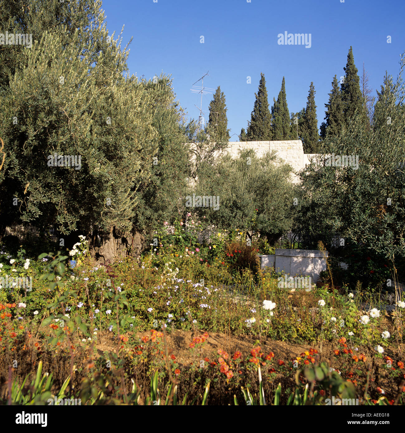 Garden of Gethsemane Jerusalem Israel Middle East Stock Photo ...