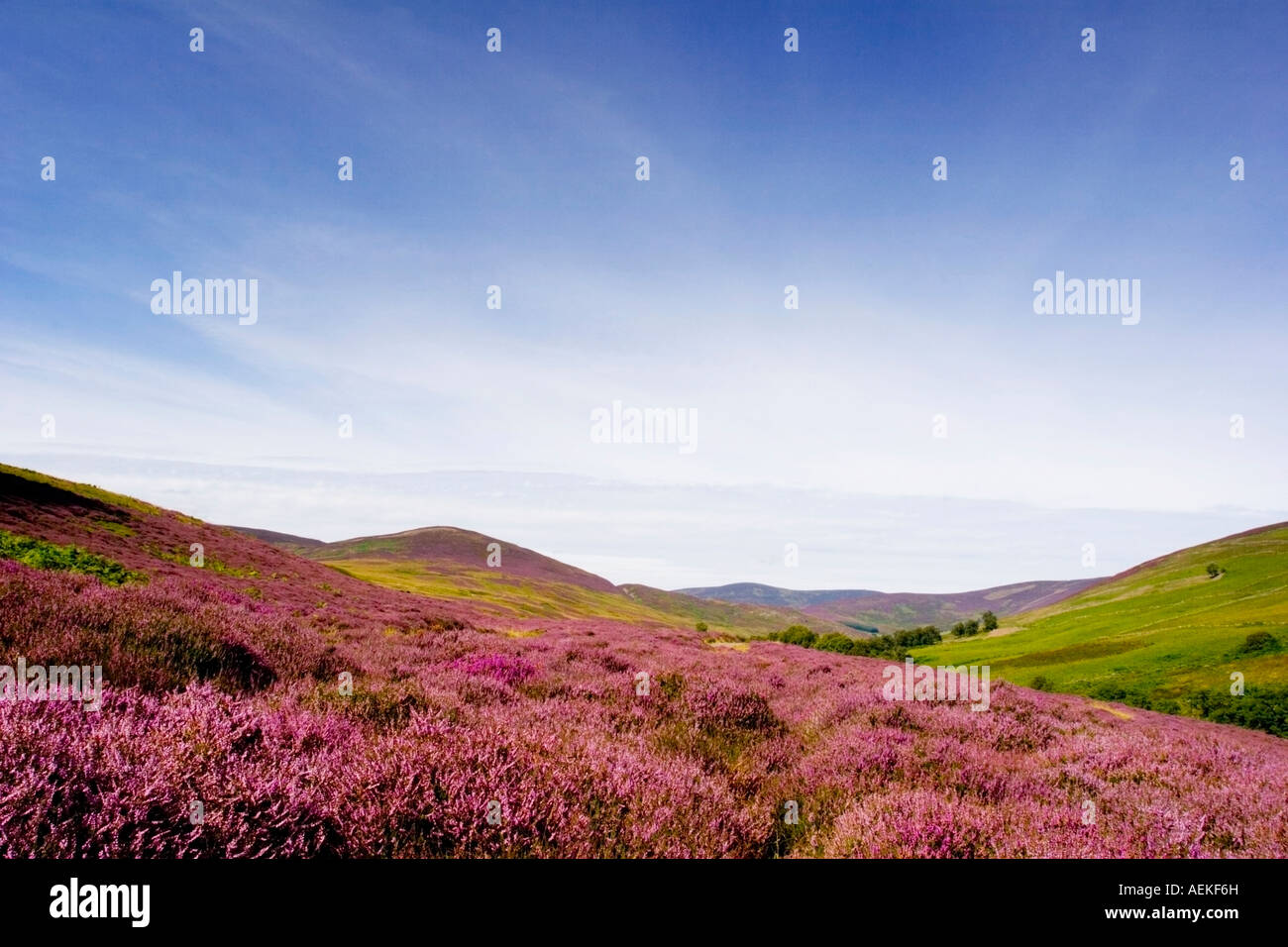 a-view-across-the-heather-clad-hills-of-